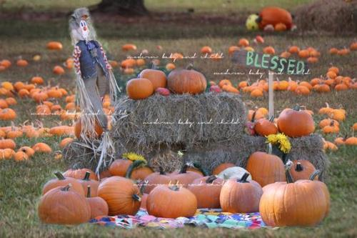 30 Thanksgiving Zoom Background: This year, be on the lookout for some great Thanksgiving zoom backgrounds and get the best Background pictures